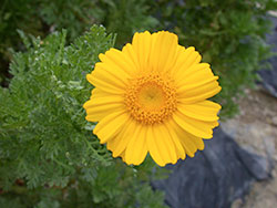 23-Flower_web