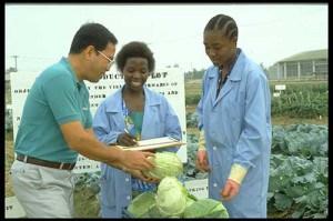 vegetables, AVRDC - The World Vegetable Center