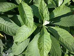 58 Leaves_smweb