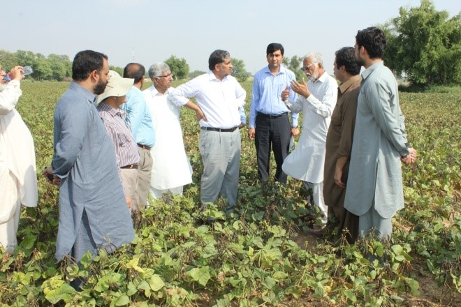 Farmers and scientists evaluate a mungbean crop during the Field Day.