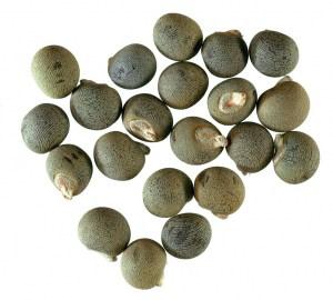 hompg_Hairless-seeds-Okra_940x847px