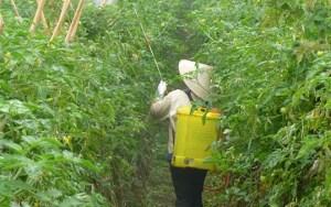 pesticide_539px