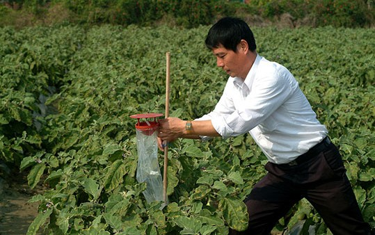 Use of insect pheromones in vegetable pest management: Successes and struggles