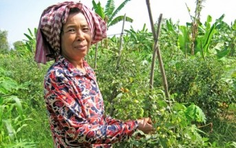 Safe and sustainable crop protection in Southeast Asia: Status, challenges and policy options