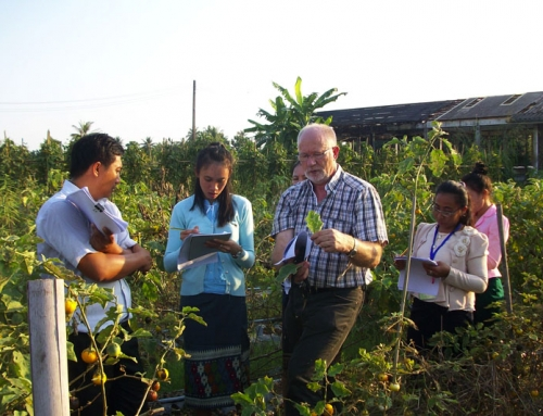 Vegetable germplasm conservation and use in Lao PDR