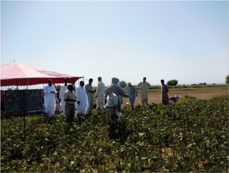 Farmers interact with AVRDC staff and national agriculture system researchers on mungbean production technologies.