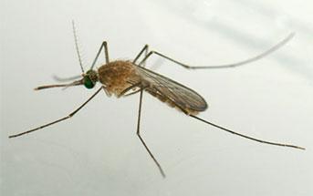 Insecticide resistance status in Culex quinquefasciatus in Benin