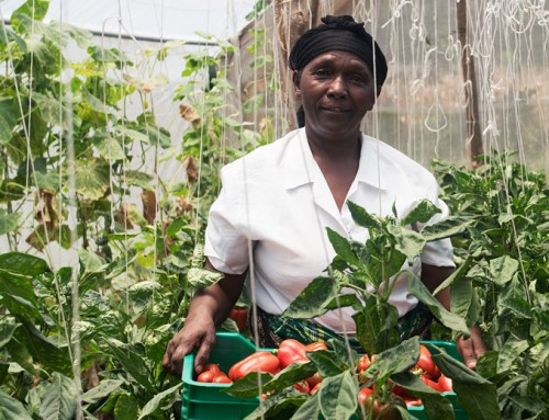 Boosting the vegetable sector in Africa