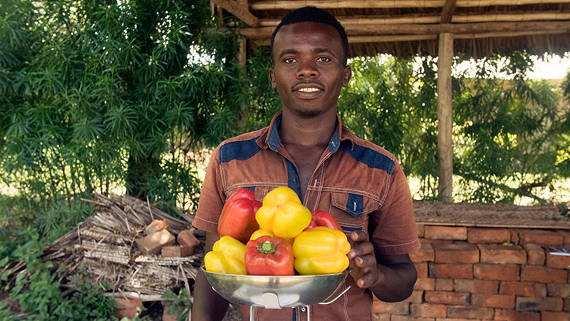 Joshua is among the many young people in Tanzania who have learned vegetable production skills with a market focus from the VINESA project. With pepper harvests like these, he is sure to find good prices for his produce from traders.