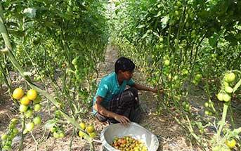 recent-research_bangladesh