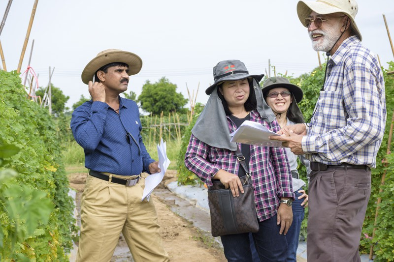 Visitors from East-West Seed, Thailand and Ajeet Seeds, India discussing the traits of bitter gourd breeding lines with WorldVeg Cucurbit Breeder Narinder Dhillon.