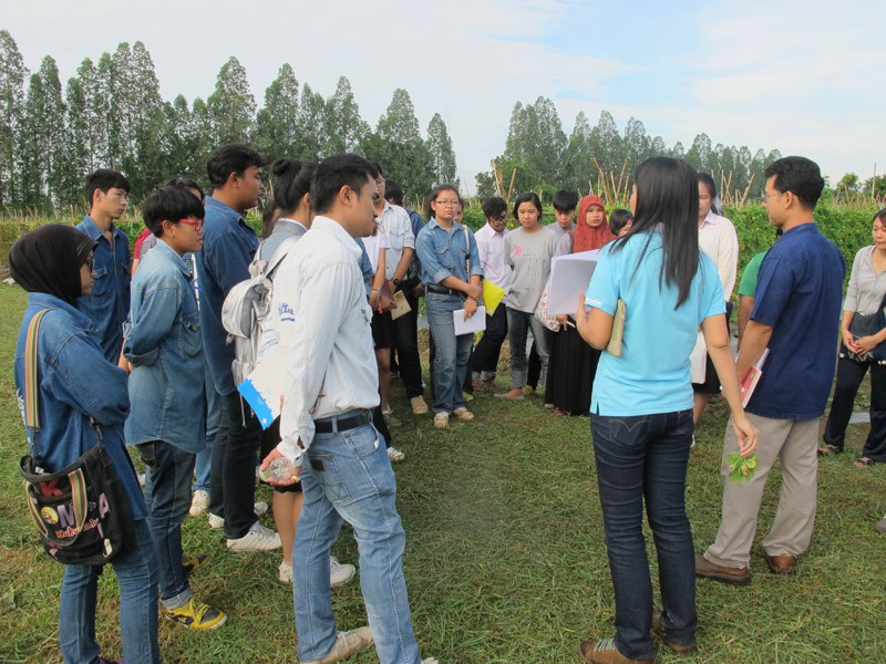 Graduate students and scientists from Department of Horticulture, Kasesart University, Kamphaeng Saen Campus, Kamphaeng Saen, Thailand discussing the traits of bitter gourd lines.