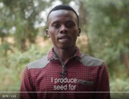 Producing pepper seed