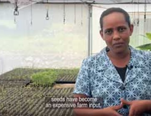 Producing quality seedlings