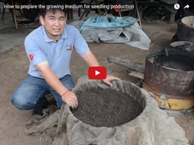 How to prepare growing medium for seedling production