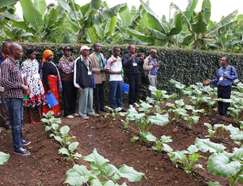 Africa Vegetable Breeding Consortium