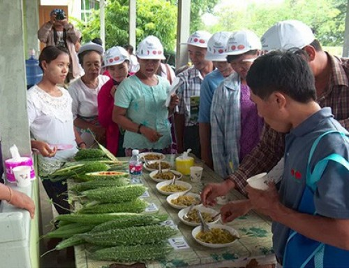 A day for cucurbits in Myanmar