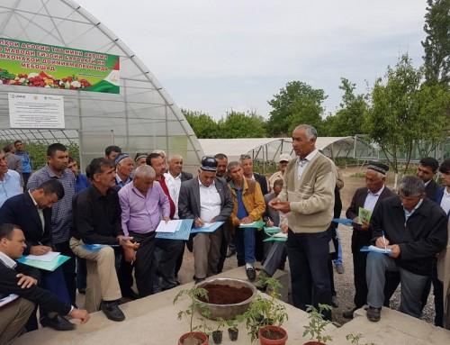 Tajikistan nutrition-sensitive vegetable technologies: Phase II