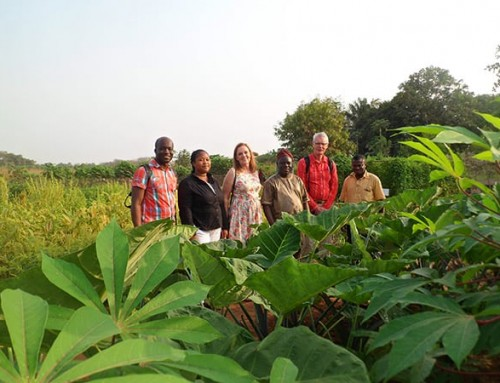 Traditional vegetables capture attention in Cotonou