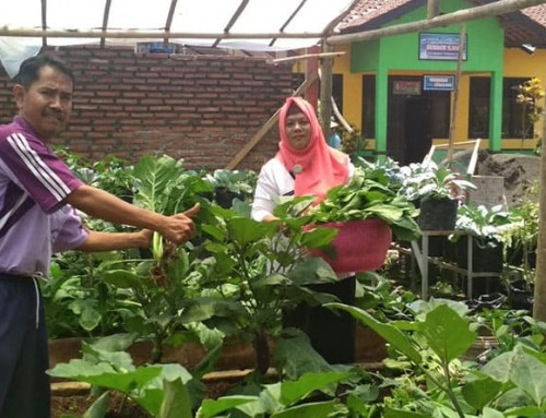 School gardens growing in Indonesia