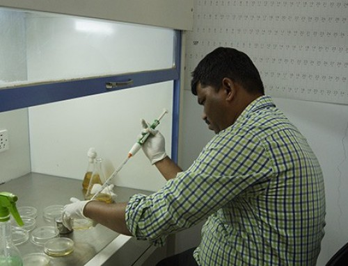 Training for South Asia's seed companies