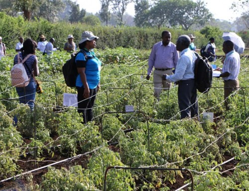 Seed consortium for Africa takes root in Tanzania