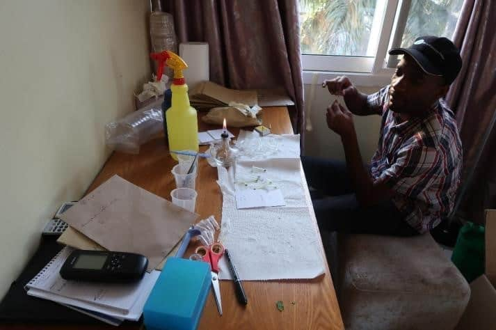 Raphael Mallogo preparing leaf and stem samples for disease evaluation.