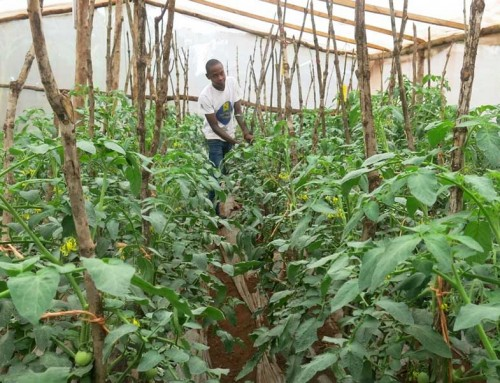 Youth proud to be part of a farming family