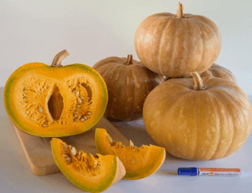 Global Pumpkin Open Field Day
