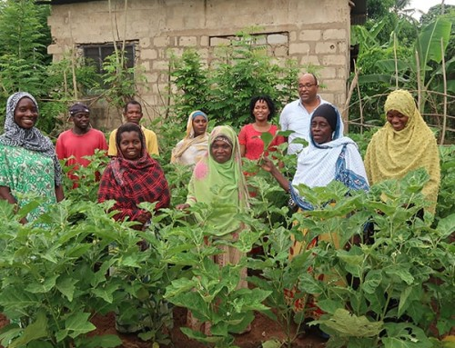 Traditional vegetables ease farmers' finances